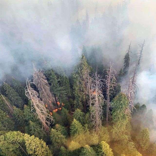 Le feu géant de Colony menace directement les plus grands séquoias du monde. © sequoiakingsnps, Instagram