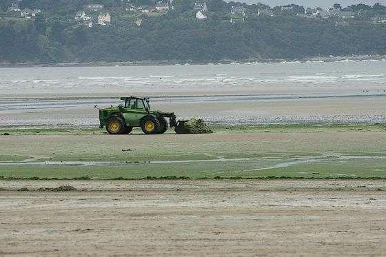 Un tractopelle ramassant les algues vertes sur la plage de Saint-Michel-en-Grèves. © SuperNo, Superno.com, DR