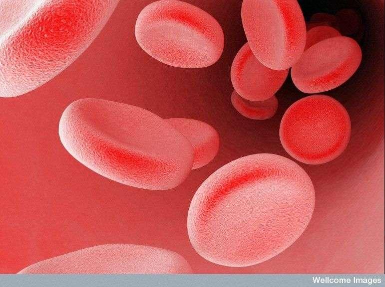 Les baroréflexes sont des réflexes permettant de contrôler la pression du sang. © Maurizio de Angelis, Wellcome Images, Flickr, CC by-nc-nd 2.0