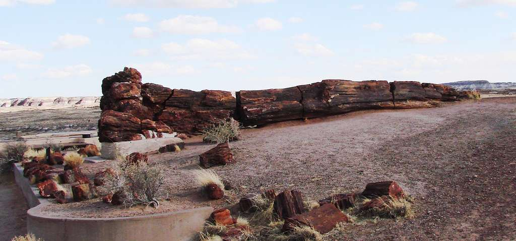 La perminéralisation intervient notamment dans la fossilisation des arbres. Le fossile présenté à l'image mesure dix mètres de long. Il se trouve au sein du Petrified Forest National Park (Arizona, États-Unis). © Martin Labar, Flickr, cc by nc 2.0
