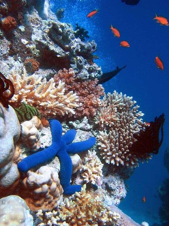 Les récifs coralliens sont des écosystèmes très productifs. © Richard Ling, Wikipédia, GNU 1.2