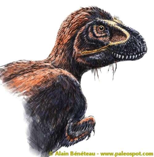 Représentation artistique d'un Tyrannosaurus rex couvert de plumes. Nous sommes loin de l'image véhiculée par les films Jurassic Park. © Alain Bénéteau