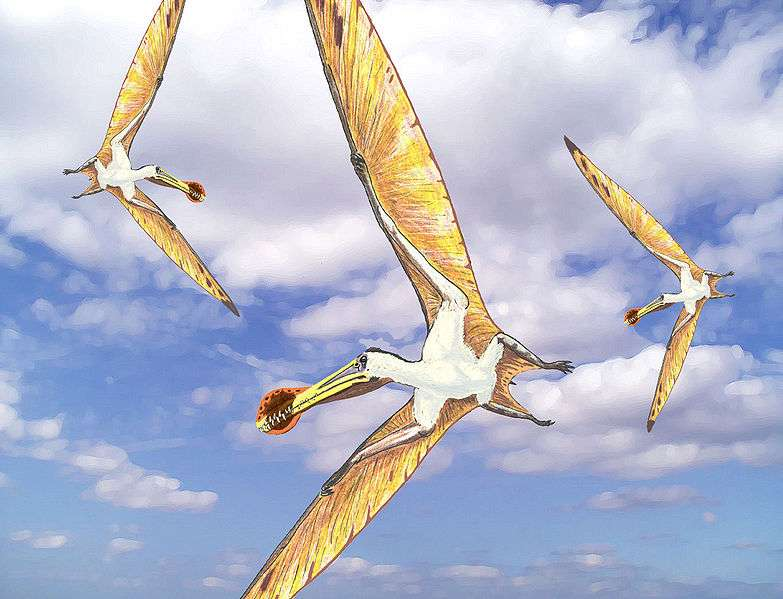 Un vol d'Ornithocheirus. © Dmitry Bogdanov, Wikimédia CC by 3.0