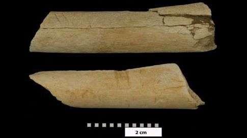 Les traces laissées sur des deux os sont manifestement la trace d'un outil de pierre utilisé pour trancher la viande. Il y a plus de trois millions d'années, des êtres qui nous ressemblaient découpaient leurs proies avant de les manger. © Dikika Research Project