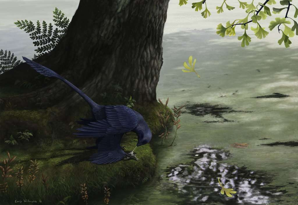 Ce microraptor, dont la couleur des plumes intervient dans les parades sexuelles, déguste tranquillement un poisson. Il est premier dinosaure volant dont on est certain qu'il pouvait attraper des poissons. © Emily Willoughby