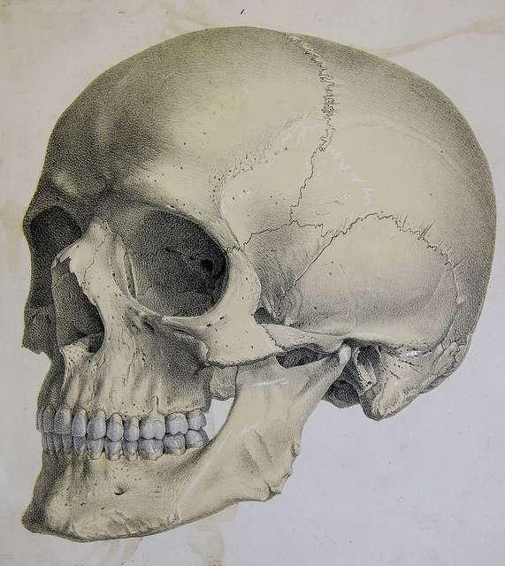 Le neurocrâne est la partie du crâne qui englobe l'encéphale. © University of Liverpool Faculty of Health & Life Sciences, d'après une lithographie de John Senex, 1723, Flickr, CC by-sa 2.0