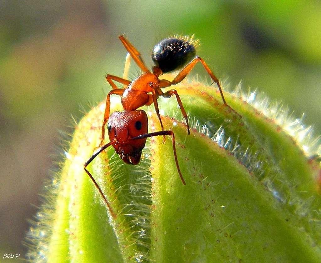 Les auteurs de cette étrange technique de communication olfactive se disent inspirés par la nature, où les odeurs sont souvent des messagères. Pour les fourmis, par exemple, c'est un véritable langage. © bob in swamp, Flickr, CC by-nc-sa 2.0