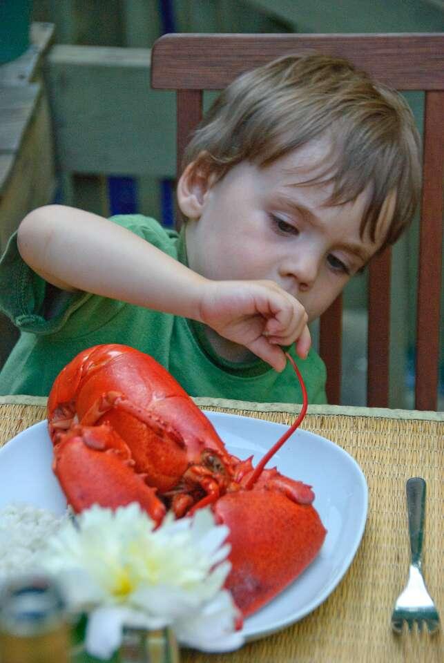 On peut observer la couleur bleue du homard en milieu naturel, mais une fois cuit il est rouge ! © Olivier Bataille, Flickr CC by nc nd 2.0