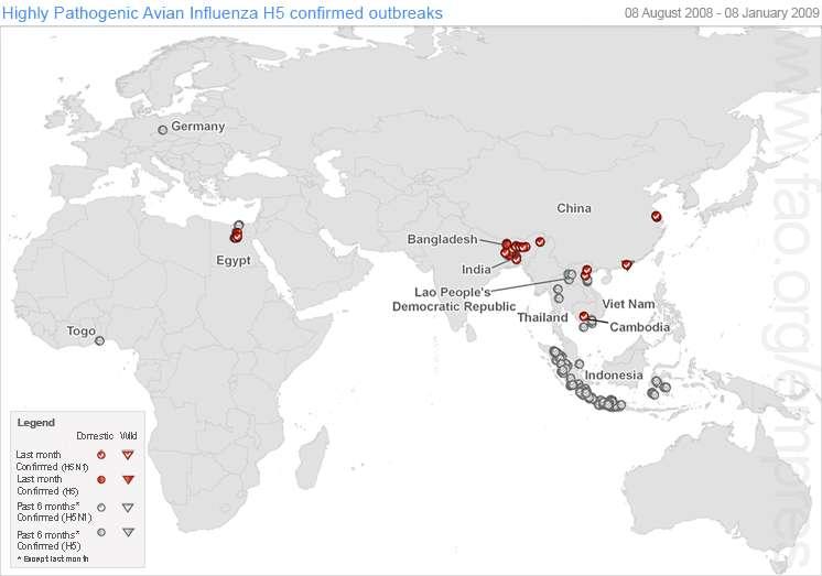 Carte des foyers de grippe aviaire maintenue à jour par la FAO. Le Bangladesh et l'Indonésie sont les plus importants. © FAO