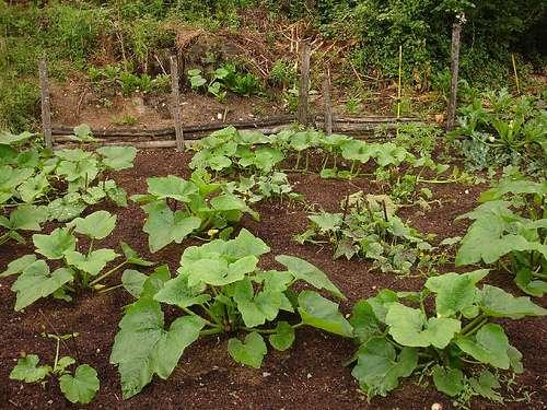 Analyser le sol du jardin permet de sélectionner les cultures les plus adaptées. © hardworkinghippy, Flickr, CC BY-SA 2.0