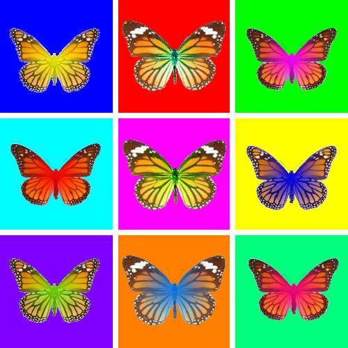 Les papillons comme le monarque contiennent dans leur ADN des gènes provenant des guêpes qui les parasitent et constituent en quelque sorte des OGM produits naturellement par les virus de ces guêpes. Un phénomène représenté symboliquement ici par les couleurs fluorescentes surimposées sur les papillons. © IRBI-CNRS, Corentin Drezen