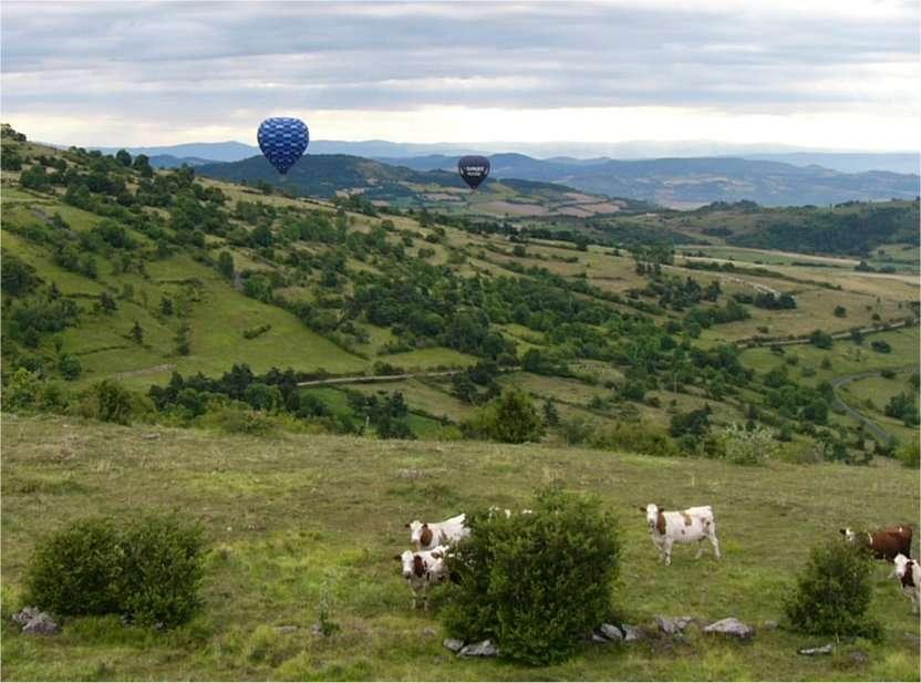 Une solution pour faire avancer ce débat : continuer à observer les vaches. Les adeptes du vol en ballon détiennent peut-être des éléments de réponse... © Gilles Planche