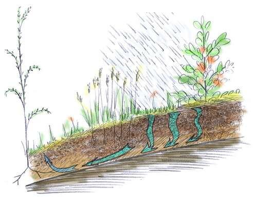 Schéma du lessivage et rôle de la zone tampon, en aval, dans le piégeage des éléments emportés. © Arpent nourricier CC by-sa