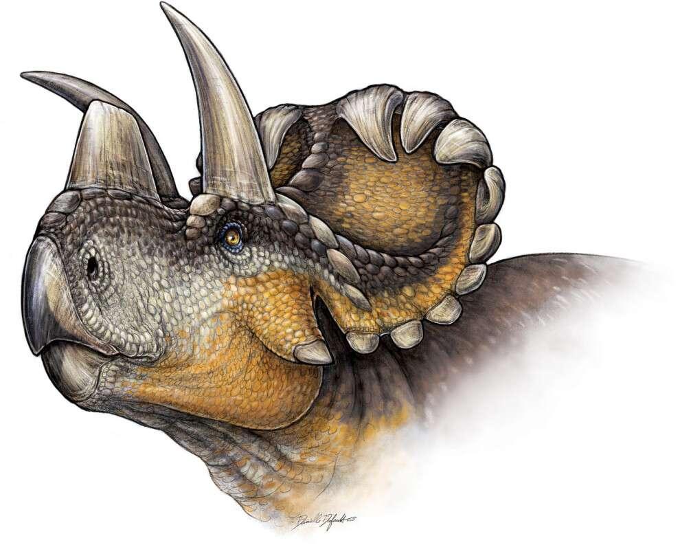 Wendiceratops pinhornensis a été nommé en l'honneur de Wendy Sloboda, une chasseuse de fossiles canadienne bien connue ayant mis au jour des centaines de fossiles importants ces 30 dernières années. Passionnée depuis son adolescence par les dinosaures, cette paléontologue amateur avait déjà découvert en 1987 le premier site de nidification de dinosaures au Canada, avec des œufs qui contenaient des embryons de dinosaures fossilisés. © Danielle Dufault