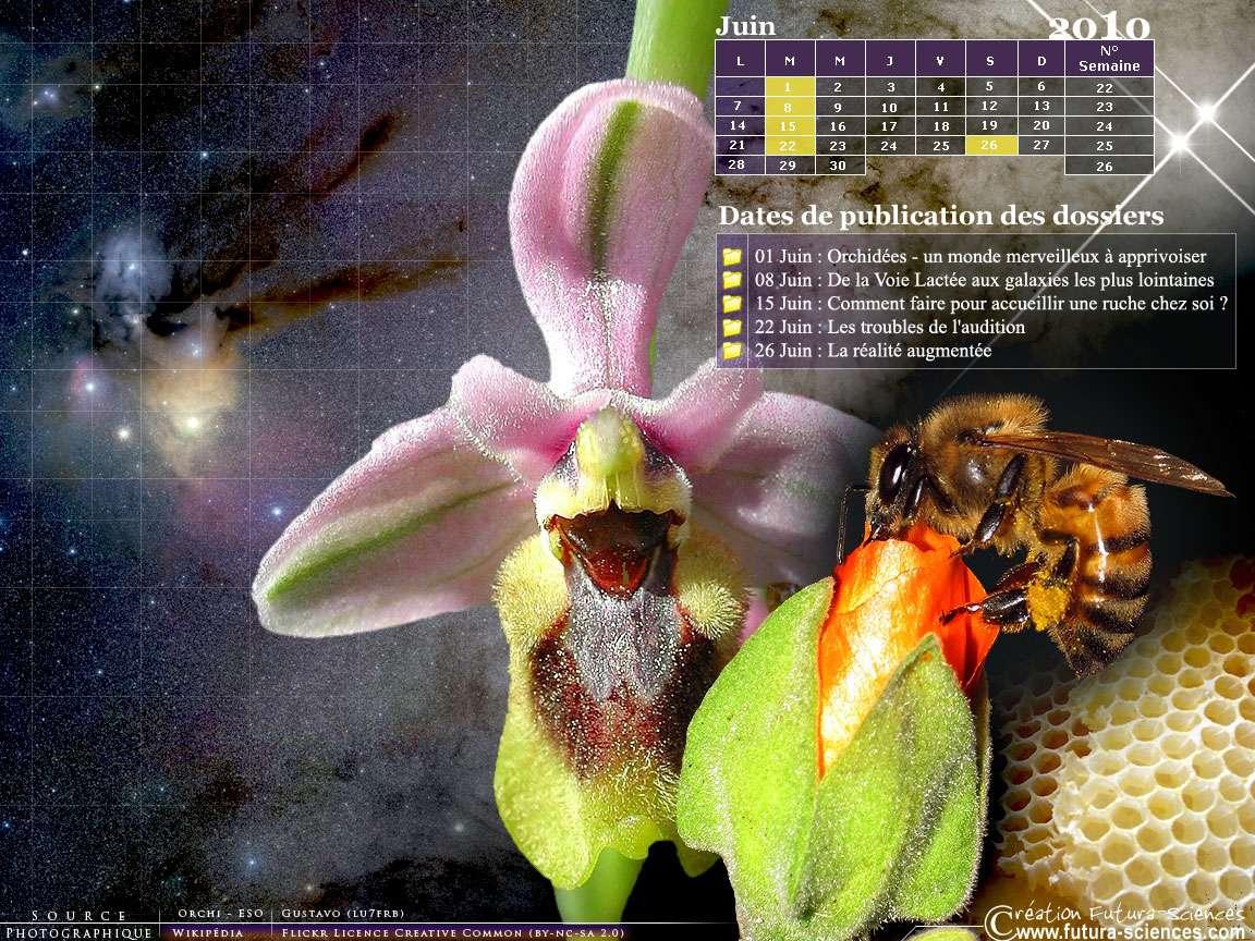 Réalité augmentée, orchidées et galaxies, crédits FS.