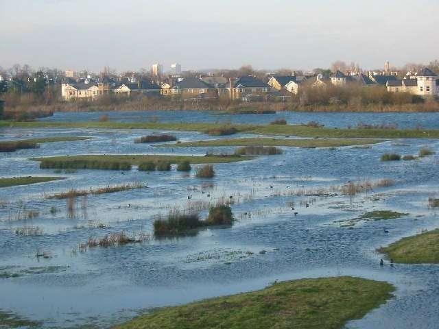 Les prairies humides, comme cette prairie inondée par la Tamise près de Londres, sont de plus en plus rares malgré leur importance écologique et leur rôle dans la lutte contre les inondations. © Ian Day, Geograph CC by-sa 2.0