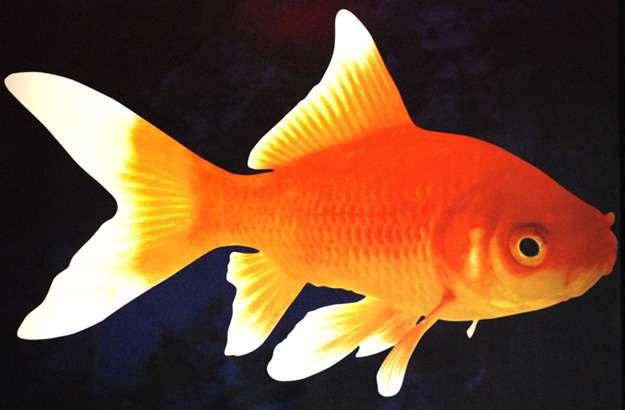Cette année, Futura-Sciences publiait quatre poissons d'avril. © DR