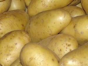 Pommes de terre