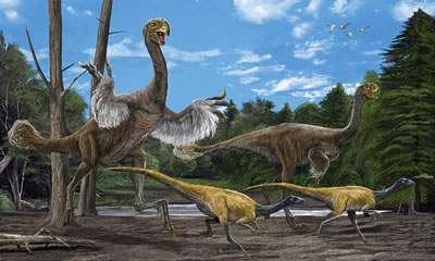Le Gigantoraptor devait courir vite. Mais était-ce pour fuir les prédateurs ou pour chasser ? Comme les plumes dessinées ici, son mode de vie reste énigmatique. Crédit : Zhao Chuang and Xing Lida/IVPP