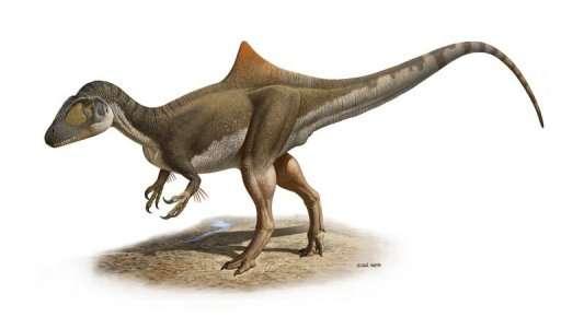 Le dinosaure Concavenator possède une bosse pointue sur le dos et quelques plumes sur les avant-bras. © Raúl Martín / Nature