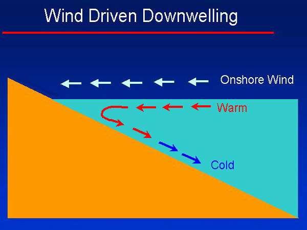 Schéma de la formation d'un downwelling côtier lorsque le vent souffle vers la côte. © US Army, Wikimedia domaine public