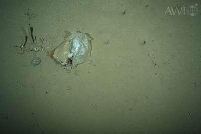Cette photographie d'un débris en plastique a été prise en juillet 2012 par 2.500 m de fond dans un des endroits les plus reculés de la planète. Une fois dégradés, les microplastiques formés pourront être ingérés par les organismes vivant. © AWI