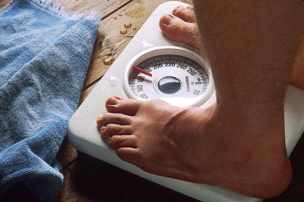 L'ensemble des adultes humains représentent 287 millions de tonnes. Un poids qui devrait continuer à augmenter, d'une part parce que l'obésité progresse toujours, d'autre part car chaque jour dans le monde l'humanité gagne plus de 200.000 personnes. © Bill Branson, NIH, DP