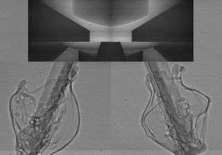 La turbulence observée en rayons X à la sortie d'un injecteur. Ce genre d'image aide les ingénieurs à concevoir des moteurs d'automobiles plus efficaces et plus propres. Crédit : Argonne National Laboratory.