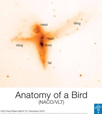"""La collision de galaxies vue uniquement avec le VLT. Les """"ailes"""" de l'oiseau s'étendent sur près de 100.000 années-lumière."""