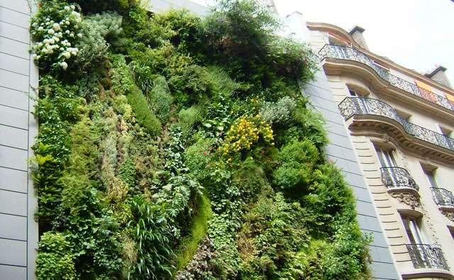 Jardin vertical sur une façade d'un immeuble parisien. Crédits DR.