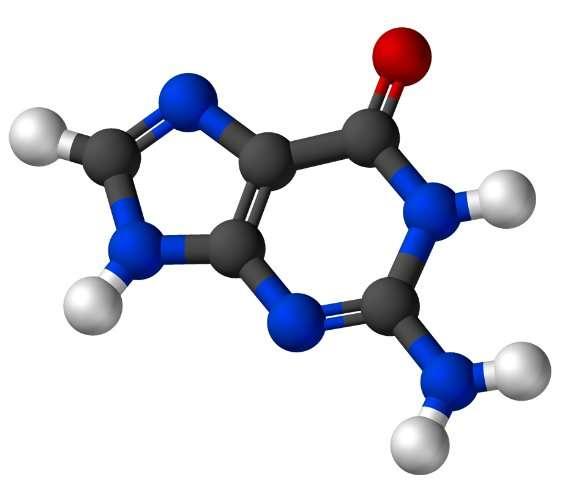 La guanine est une base azotée purique. © Wikimedia, domaine public