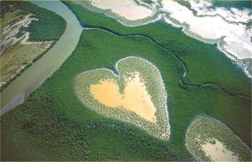 Le désormais célèbre cœur de Voh photographié par Yann Arthus-Bertrand en Nouvelle-Calédonie, près de la ville de Voh (ouest de l'île de Grande-Terre) dans une de ces zones de la mangrove, appelées tannes, qui ne sont envahies par la mer que lors des grandes marées. L'image a été publiée dans son livre La Nouvelle-Calédonie vue du ciel, et a fait la couverture de La Terre vue du ciel. © Yann Arthus-Bertrand - Tous droits réservés