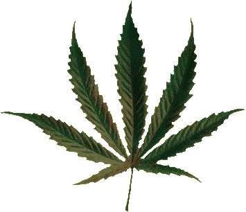 """Cannabis : la schizophrénie après le """"pétard"""" ?"""