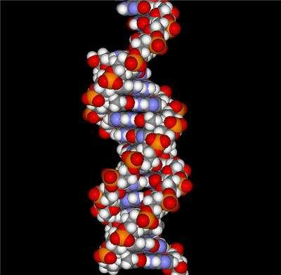 La molécule d'ADN (Crédit : Accelerys).