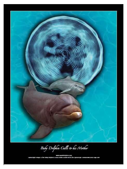 Poster (à vendre...) montrant le cymaglyphe d'un bébé dauphin appelant sa mère. © Jack Kassewitz/John Stuart Reid