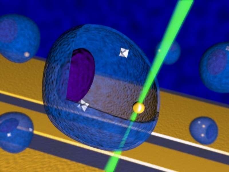Une vue d'artiste de deux nanothermomètres en diamant dans une cellule. Une nanoparticule d'or est chauffée par un rayon laser (en vert). Ces nanothermomètres devraient devenir des outils précieux pour les biochimistes et les « nanomédecins », par exemple pour progresser dans la lutte contre les cancers. © Georg Kucsko
