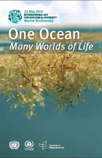 Le 22 mai 2012 se déroule la Journée internationale de la biodiversité, consacrée cette année à la biodiversité marine. Une bonne idée quand on sait que trois quarts des fonds marins nous sont inconnus... © DR