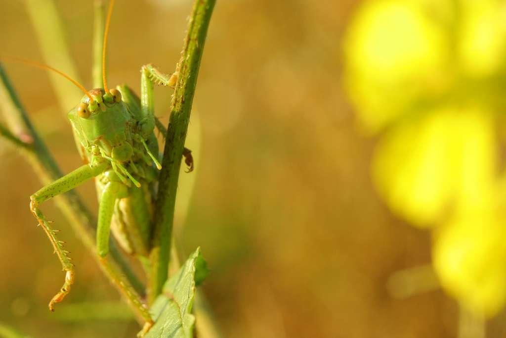Les insectes présentent une grande diversité de pièces buccales, selon leur régime alimentaire (herbivore, détritivore, nectivore, etc.). Elles sont pourtant toutes homologues, car leur ancêtre commun possédait déjà ces pièces. © ced6, Flickr, cc by nc nd 2.0