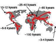 Toutes les populations humaines actuelles proviendraient d'une même souche, partie de la Corne de l'Afrique il y a moins de 100 000 ans. Crédit : Francois Balloux