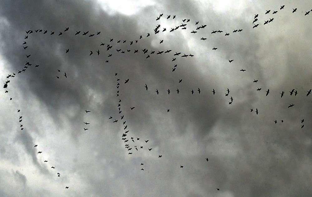 Les oiseaux sont comme les avions : quand ils volent trop bas, ils risquent de percuter le relief. © AFP Phoo/Mahmoud Zayat