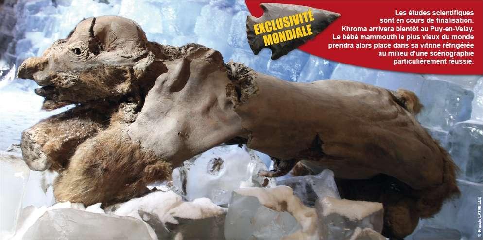 Khroma, le bébé mammouth, est exposé jusqu'au 15 novembre au musée Crozatier du Puy-en-Velay dans le cadre de l'exposition Mammouths et Compagnie. © Musée Crozatier