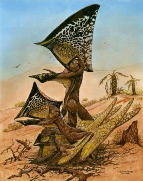 Reconstitution du ptérosaure Caiuajara dobruskii, qui se fait remarquer par son impressionnante crête au-dessus du crâne. Ces animaux, du moins ceux qui ont été retrouvés au sud du Brésil, dépassaient deux mètres d'envergure pour les plus grands. © Maurilio Oliveira, Museu Nacional-UFRJ, CC-BY
