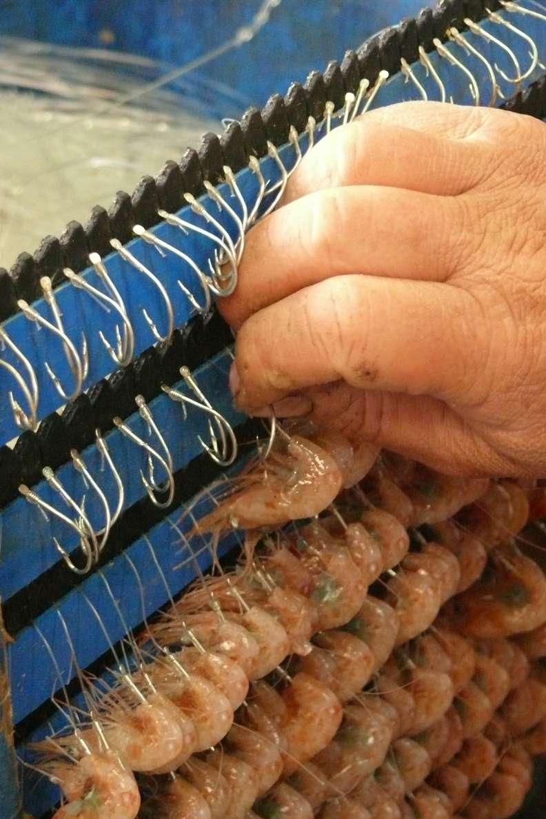 Les appâts de pêches sont placés sur des hameçons. Selon les pratiques, les palangres se composent souvent de 2 à 60 crochets. © calafellvalo, Flickr, CC by-nc-nd 2.0