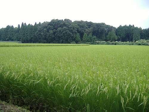 La contamination du sol dans la zone de Fukushima est quasi nulle à partir de 10 cm de profondeur. © danaspencer, Flickr, cc by nc nd 2.0
