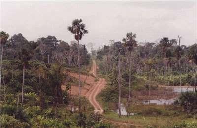 La forêt amazonienne et la biodiversité en danger