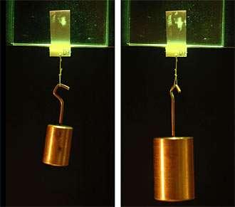 """En augmentant le poids, la surface d'adhésion des microfibres augmente aussi (les tâches verdâtres en haut du rectangle verticale). Le matériau est """"intelligent"""" . Crédit : Jongho Lee/UC Berkeley"""