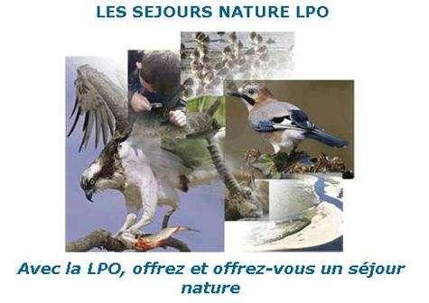 Écovolontariat : vivez l'oiseau libre au coeur de la nature avec la LPO
