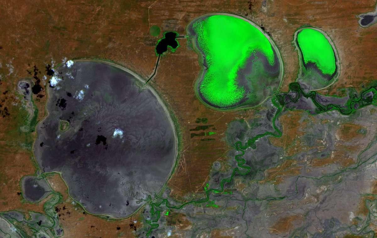 Le bassin hydrographique Murray-Darling en Australie, vu par le satellite Sentinel 2 le 29 janvier, où pour la deuxième fois en trois semaines des centaines de milliers de poissons ont été décimés suite à la sécheresse et à une prolifération d'algues. L'image a été traitée pour que ces dernières apparaissent en fluo. © Esa, Copernicus EU