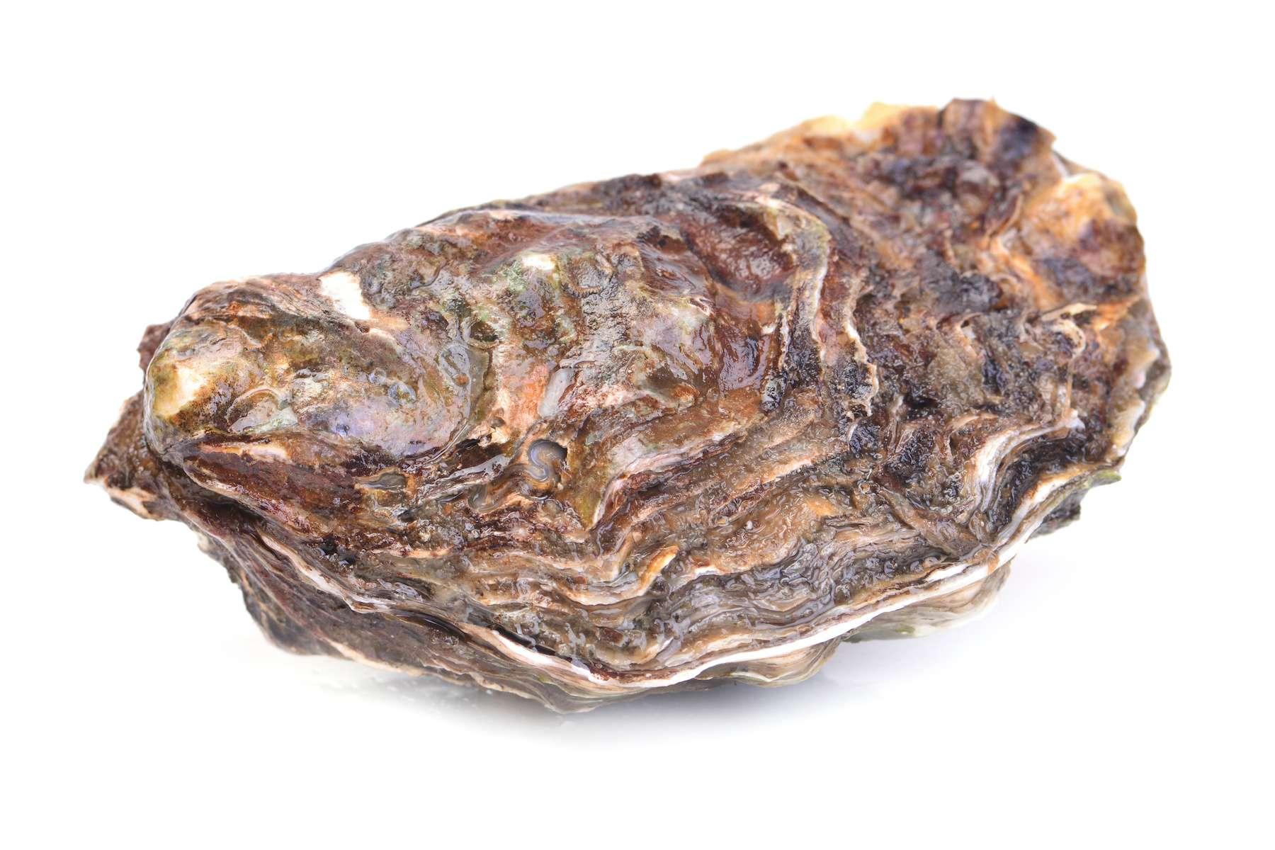 Une huître de 2,2 kg a été découverte dans le Finistère par un ostréiculteur. © valeriy555, Adobe Stock
