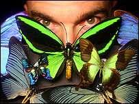 À quand des papillons renifleurs d'explosifs, téléguidés par l'homme ? (cf article de la BBC)